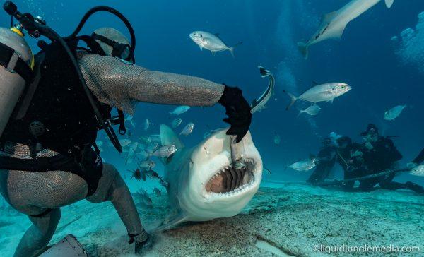 181124_Bull sharks_LJM01833