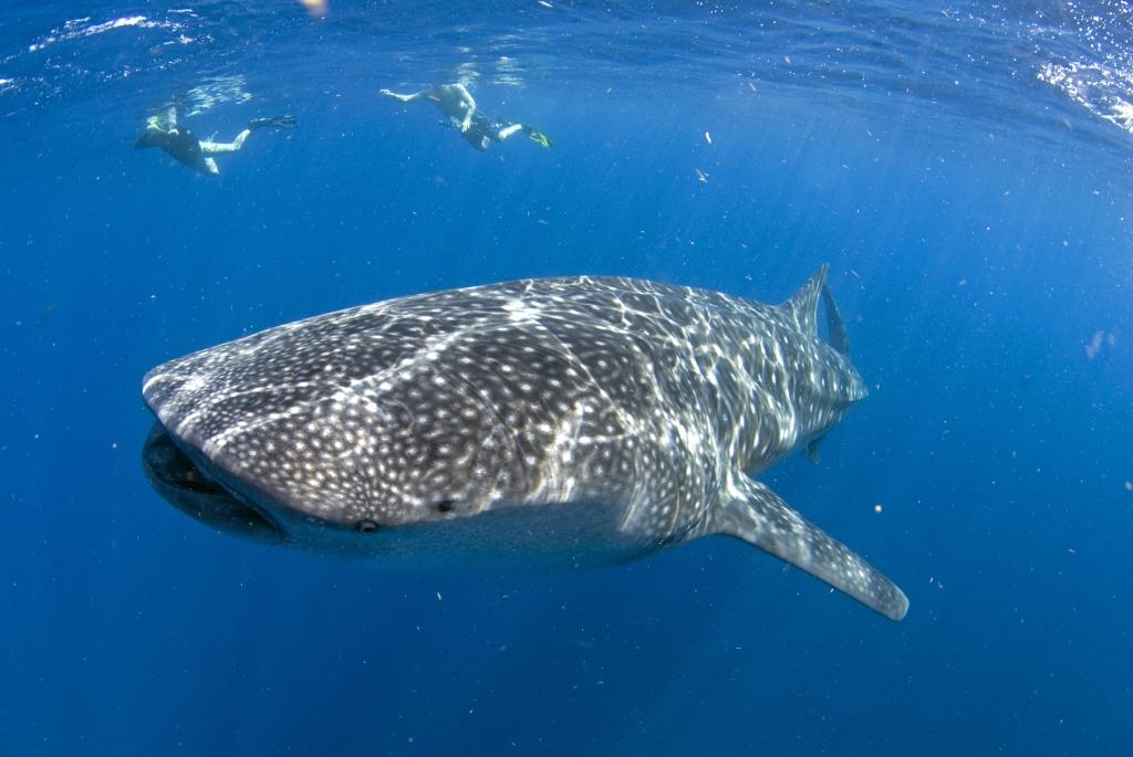 Whale (18) (1)