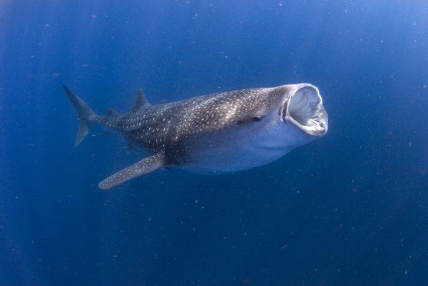Whale (19)